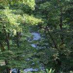 嵐山渓谷の木漏れ日